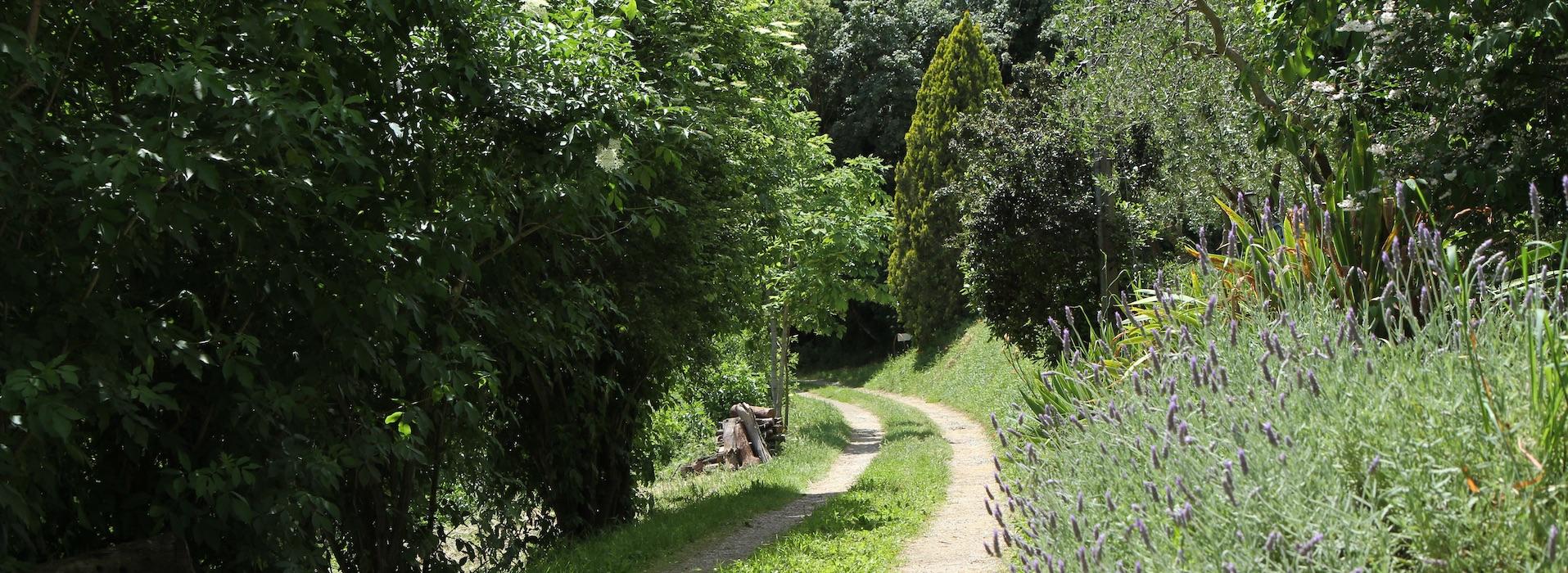 Strada di ingresso al Podere Porcino di Castiglione in Teverina con cespuglio di lavanda