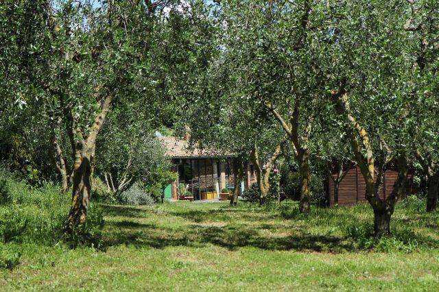 Olives et jardin devant le Studio