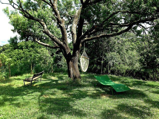 Garten - Mandelbaum