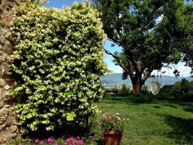 Jardin devant Casa Erika