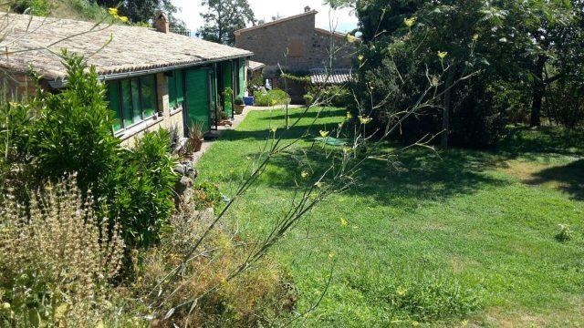 Fenouil sauvage dans le jardin